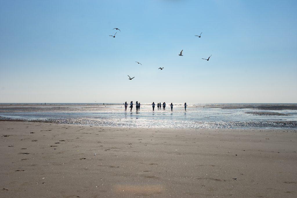 séance photo evjf touquet plage activité originale enterrement de vie de jeune fille lille nord pas de calais hauts de france oiseaux