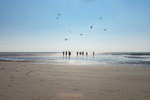 evjf touquet plage activité originale enterrement de vie de jeune fille lille nord pas de calais hauts de france oiseaux