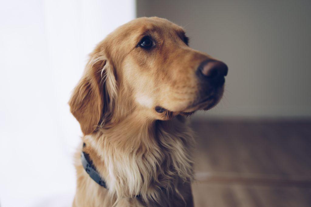 association chiens guides d'aveugles roncq