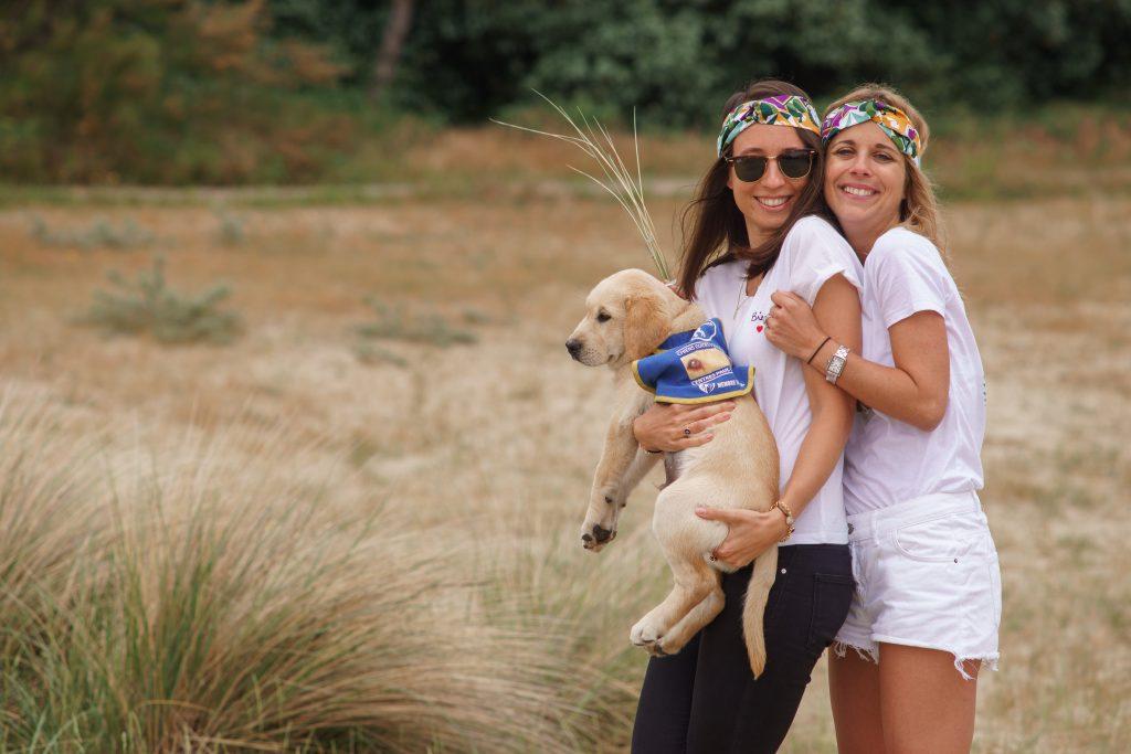 guide d'aveugle chien labrador