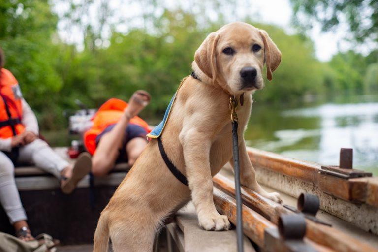 chien guide aveugle transport bateau