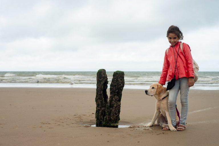 chien guide plage sable