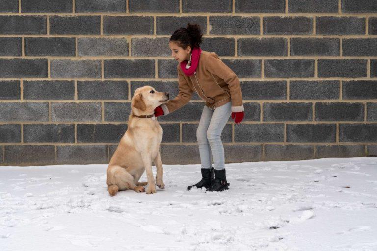 chien enfant éducation