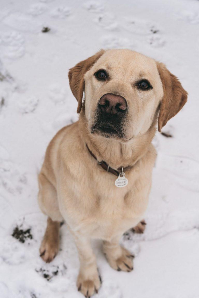 chien animal photographe shooting
