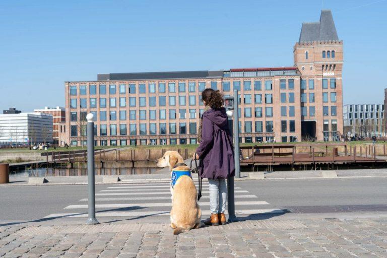 éducation chien guide aveugle loi